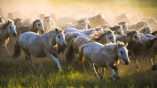 Domestic horses' mysterious origins may finally be revealed