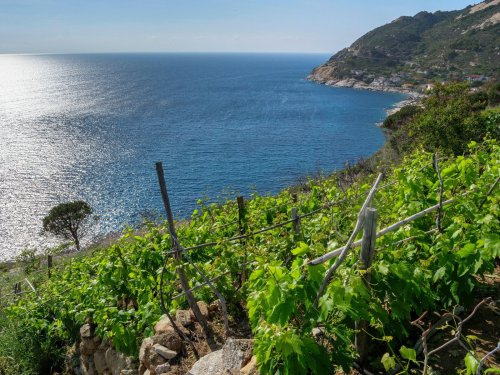 Ancient wines are having a moment in Italy. Here's why.
