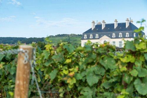 A road trip through Burgundy, France's legendary wine region