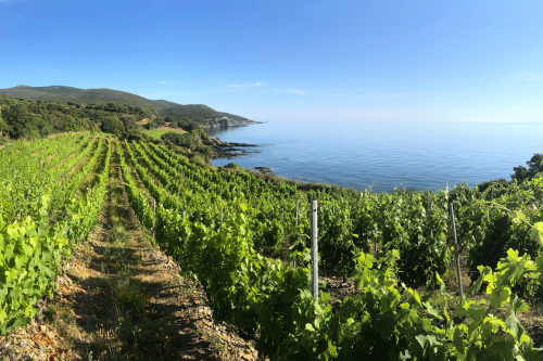 How to experience the wine harvest in Europe