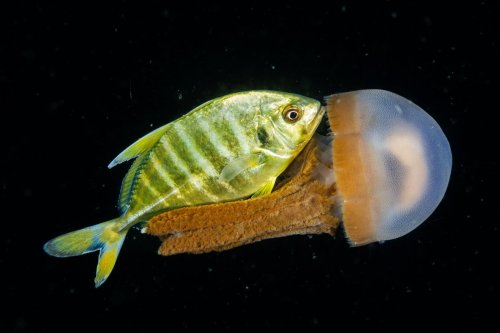 Meet the creatures of the night sea