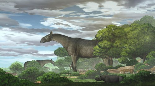 Fossils of rhino taller than a giraffe found in China