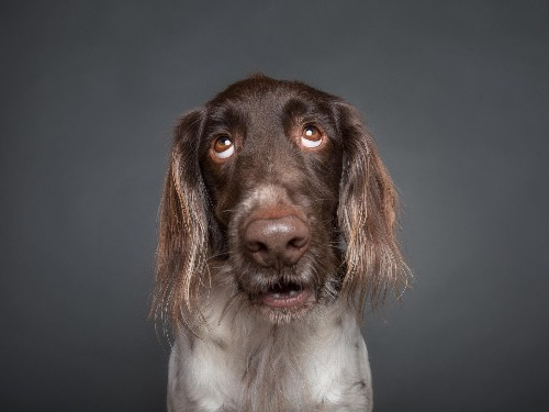 What's your dog thinking? A brain scan offers clues