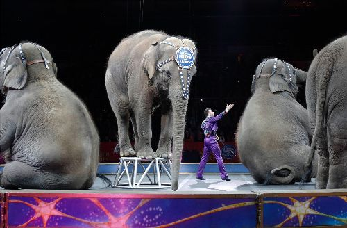 Ringling's retired circus elephants to move to conservation center