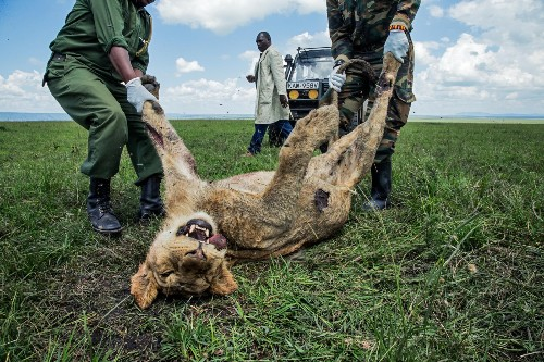 Why poison is a growing threat to Africa's wildlife