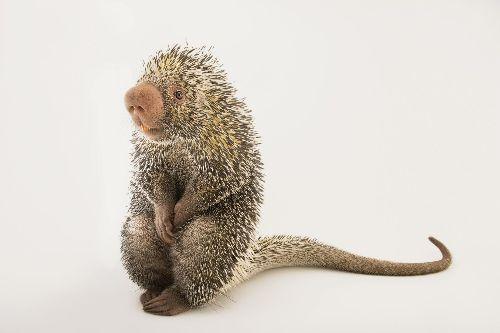 Inside Joel Sartore's 'Photo Ark' for animals