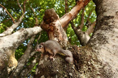 Sleepy dormice are losing their cozy tree hollows