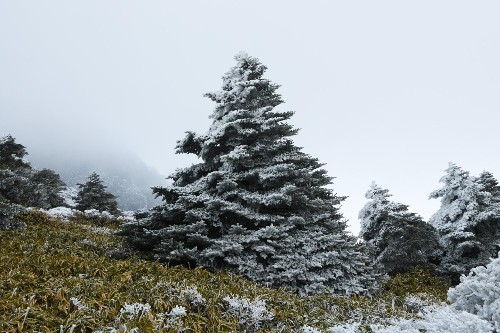 Climate troubles loom for South Korea's 'Christmas Tree Island'