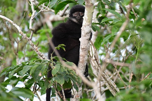 New monkey species found hiding in plain sight