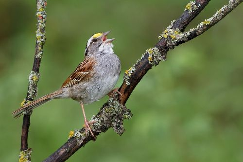 Sparrows are singing a new song, in a rapid, unprecedented shift