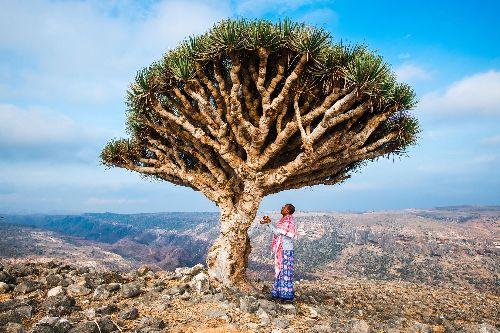 Can Socotra, Yemen's 'Dragon's Blood Island,' be saved?