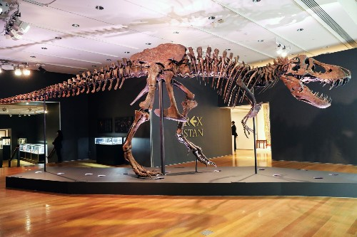 'Stan' the T. rex just sold for $31.8 million—and scientists are furious