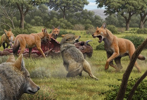 Dire wolves were real—and even stranger than we thought