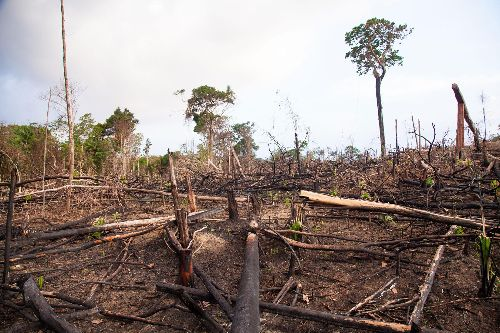 Deforestation is leading to more infectious diseases in humans