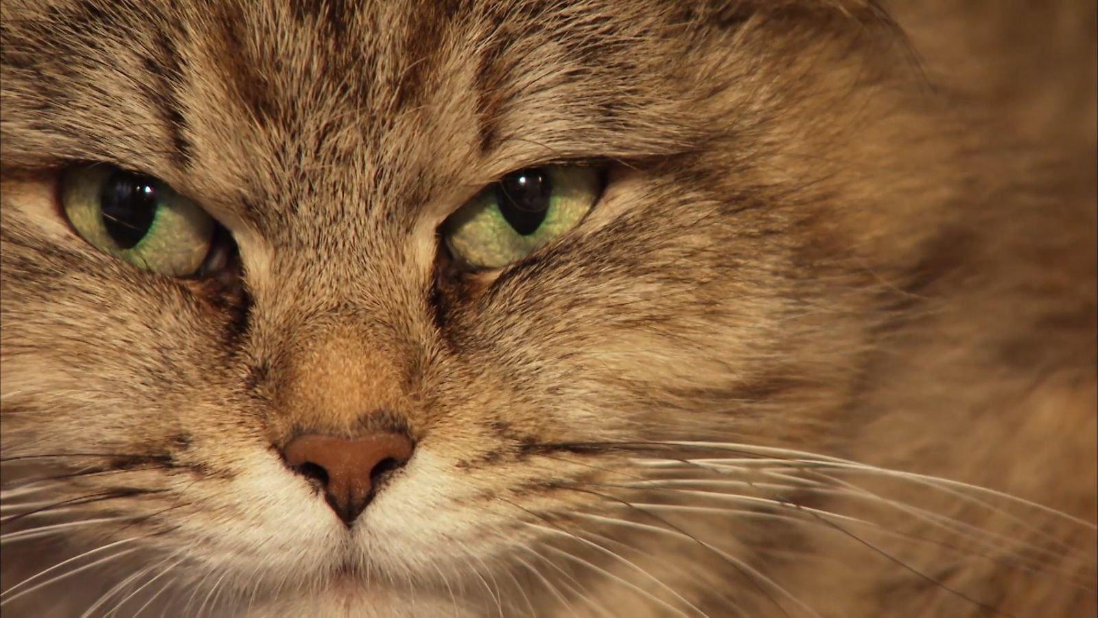 Warum wir Katzen lieben