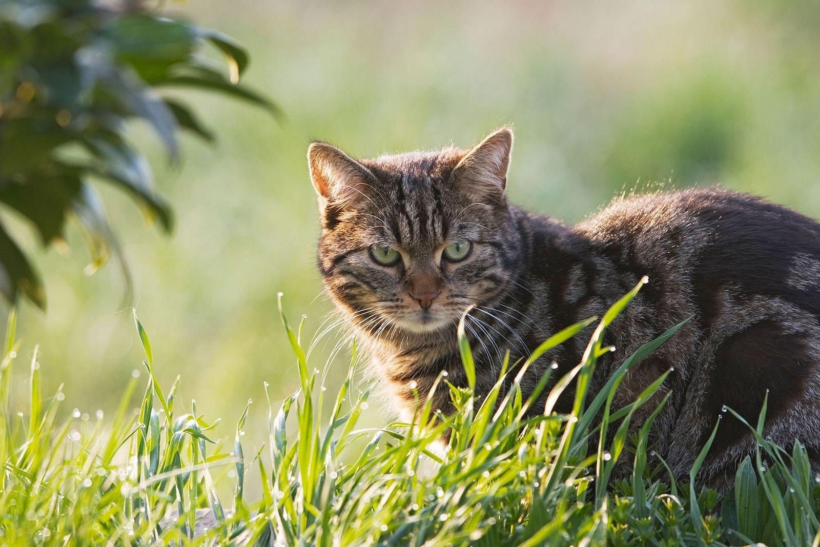Der Killerinstinkt der Katzen