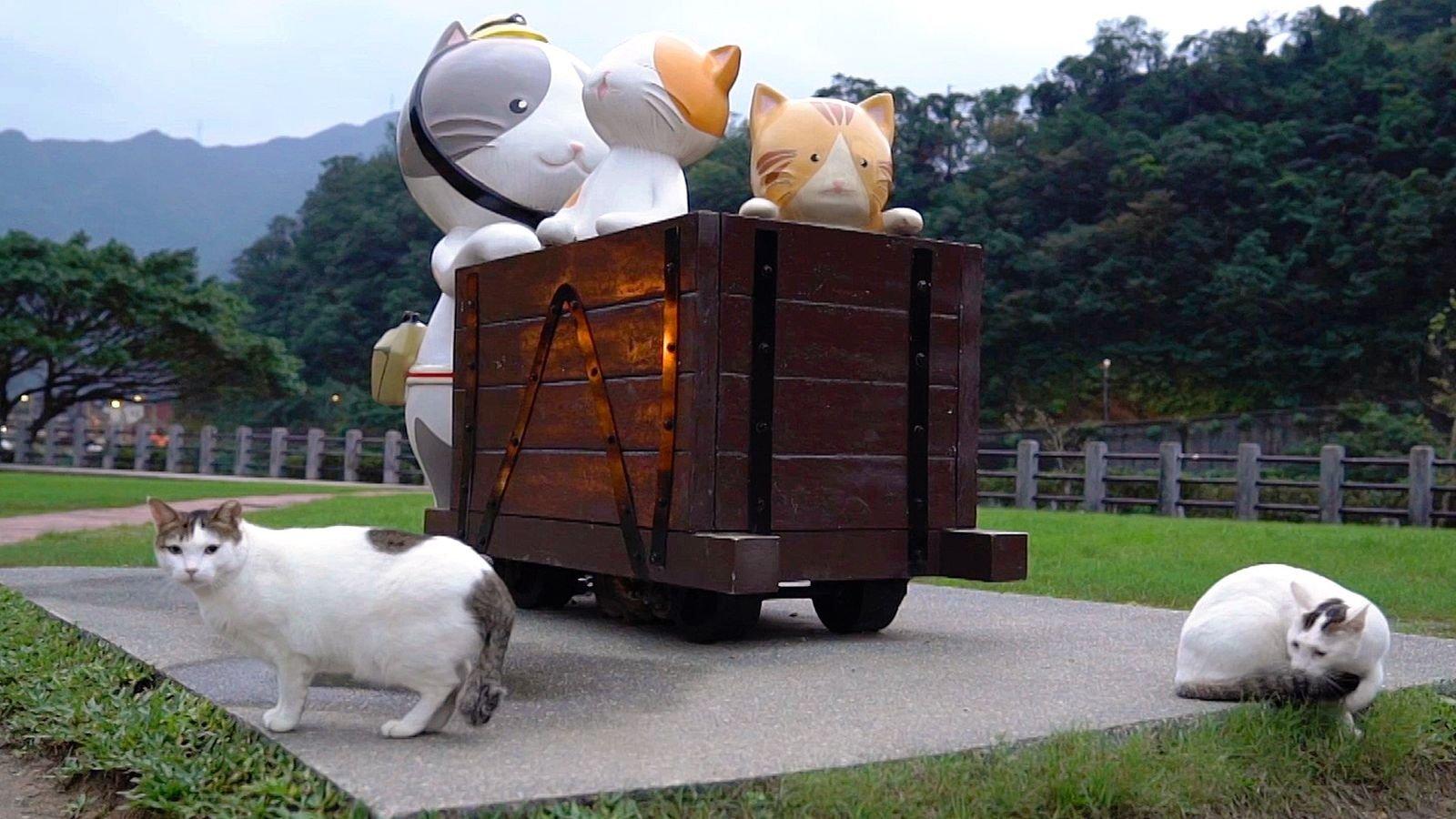 """Willkommen in Taiwans """"Katzendorf"""""""