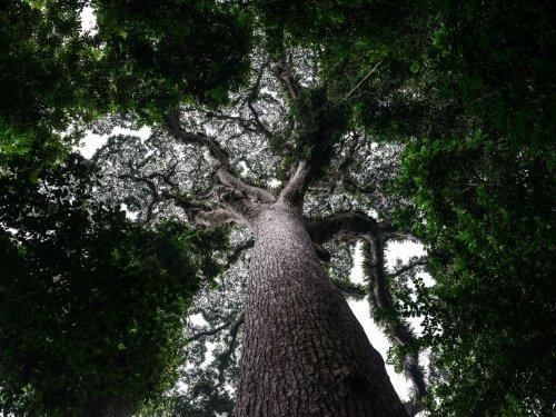 Zweitgrößter Regenwald der Welt im Kongo zur Abholzung freigegeben