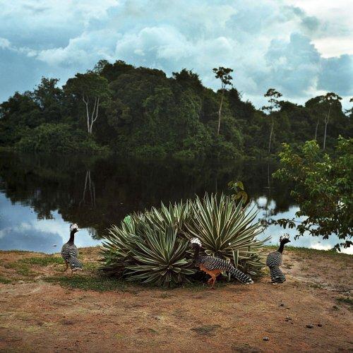 Staudämme im Regenwald: Stämme des Amazonas kämpfen um ihr Überleben