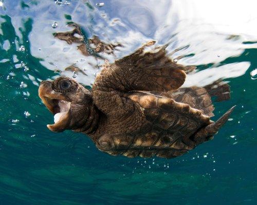 Was wäre eine Welt ohne Schildkröten?