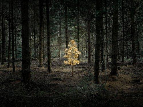 Ein Märchenwald, in dem alles möglich ist