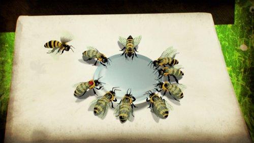 Die Entschlüsselung der Sprache der Bienen