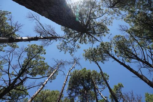 Nachtaktive Wälder – warum Bäume vor allem in der Dunkelheit wachsen
