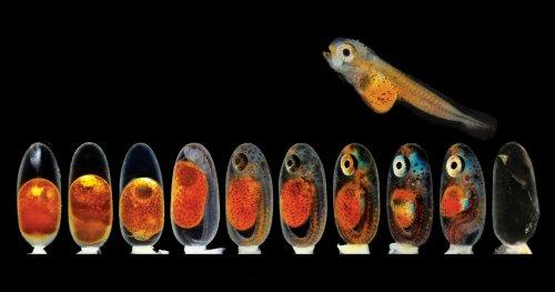 Farbe, Form und Funktion: Kleine Wunder unter dem Mikroskop