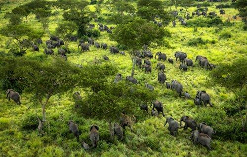 Elefanten kehren in Konfliktzonen-Nationalpark zurück