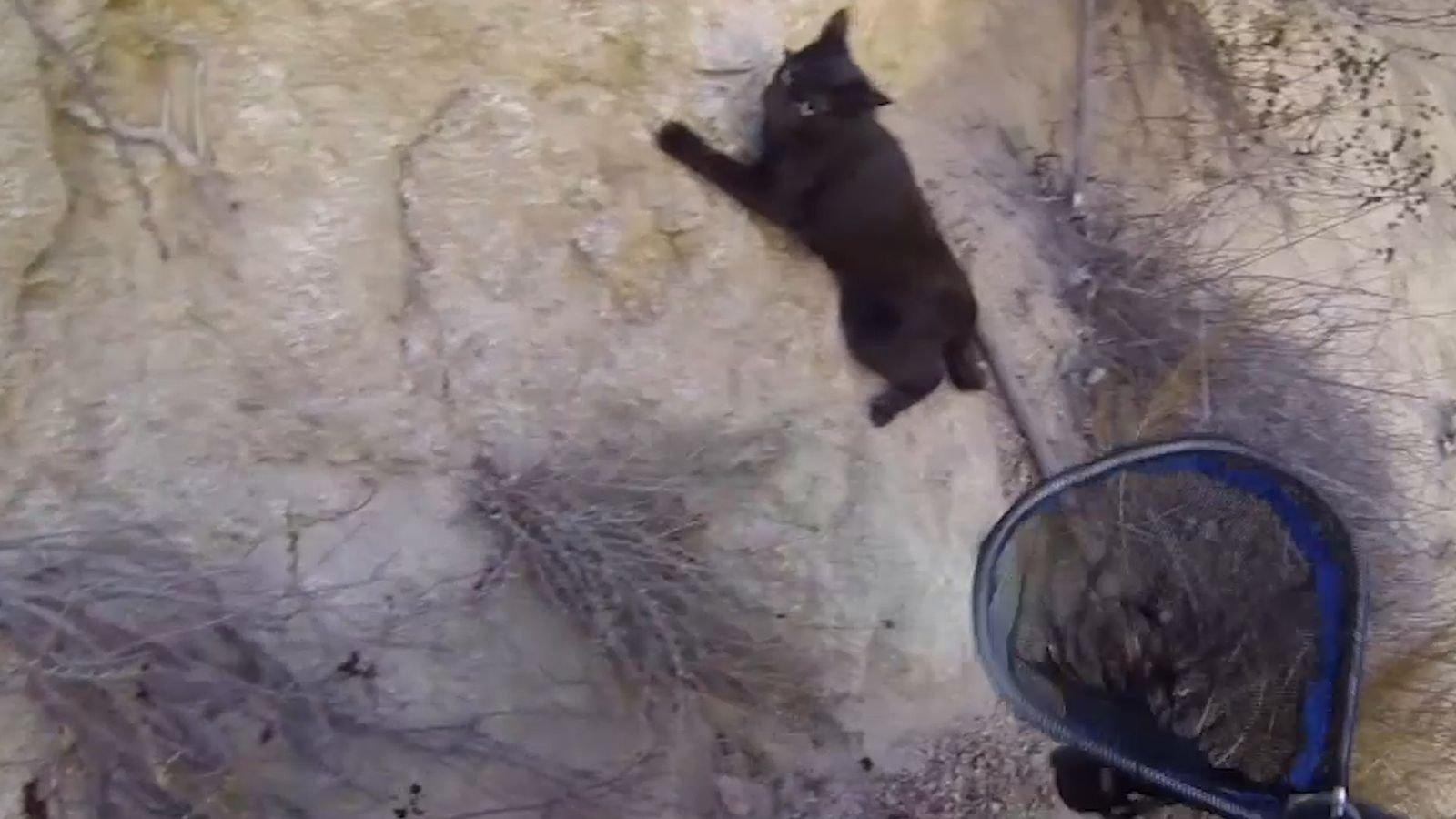 Katzenrettung von der Klippe