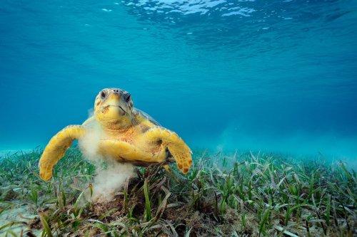 Schildkröten können über 100.000 winzige Lebewesen auf ihrem Panzer tragen