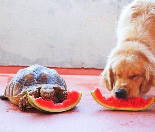 """Gerettete Schildkröte und Hund werden """"beste Freunde"""""""