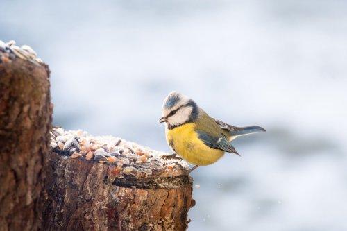 Genial gedachte Projekte: Knödel für die Vögel