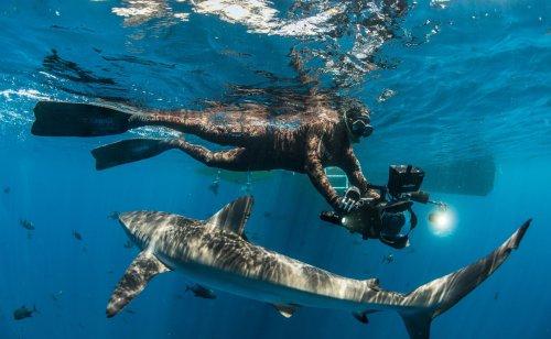 Pristine Seas: un viaje a la conservación de los paraísos salvajes liderado por el explorador español Enric Sala