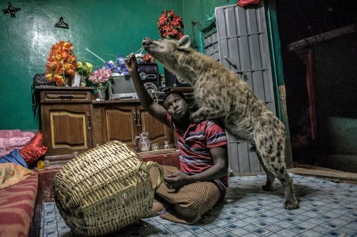 L'homme qui murmurait à l'oreille des hyènes