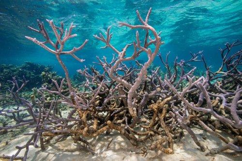 Pourquoi nous pensons qu'il est encore possible de sauver les océans