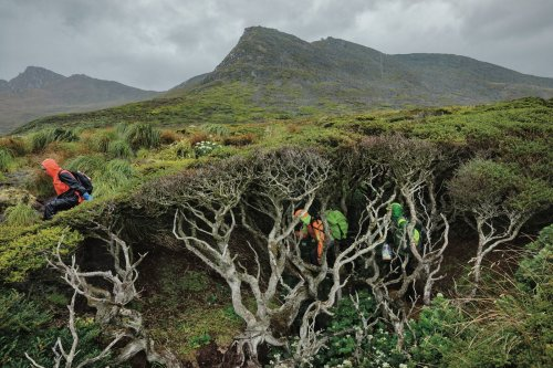 Sur l'île Horn, à la recherche de l'arbre du bout du monde