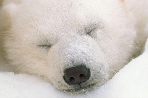 Een dutje terwijl je vliegt – en andere slaapgewoonten van dieren