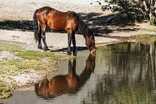How Horses Can Recognize Their Reflections