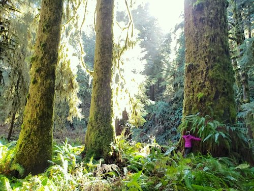 Ottawa dollars can save B.C.'s old-growth forests