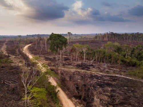 La forêt amazonienne brésilienne atteint un point de bascule climatique