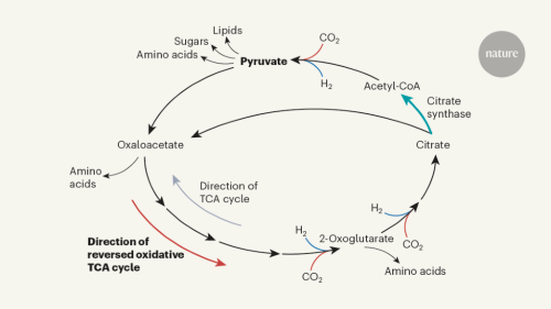Life in a carbon dioxide world