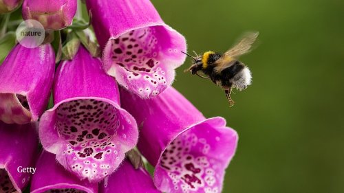 Flowers adapt to welcome the birds — but not the bees