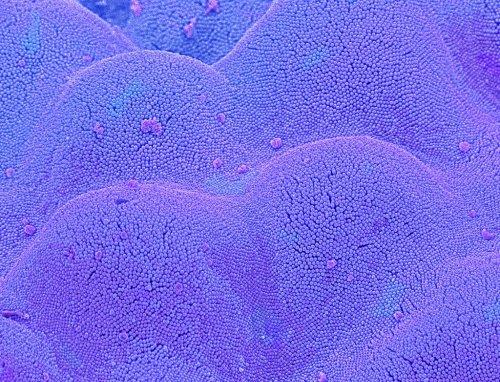 Deciphering the molecular language of the small intestine
