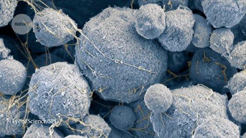 Microscopic Universes..  cover image