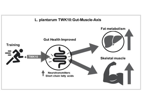 Investigations into small-dose ingredients for human performance and recovery