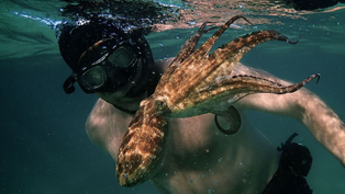 """How """"My Octopus Teacher"""" Defied Convention - Issue 99: Universality"""