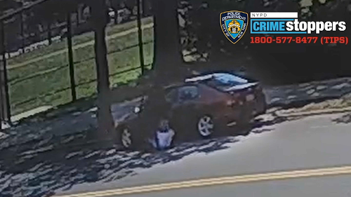 Perp Pulls Woman, 73, Out of Car and Drives Off With Toy Poodle Inside: NYPD