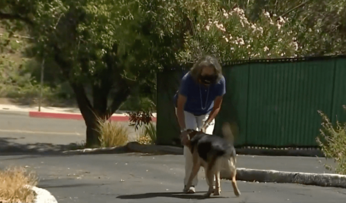 Think Twice Before Taking Your Dog on Hike in Blistering Heat: Dogs Are Dying From Heat Exhaustion