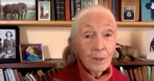 Jane Goodall with Vatican cardinal: Human survival depends on biodiversity
